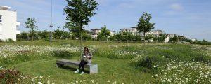 Prairie fleurie dans le Parc du Mont Evrin, dans l'écoquartier de Montévrain