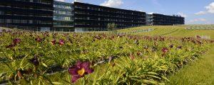 Toitures plantées du bâtiment Bienvenue à la Cité Descartes