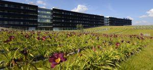 Toitures plantées du bâtiment Bienvenüe à la Cité Descartes