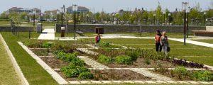 Photographie du jardin de partage des savoirs dans l'écoquartier Le Sycomore