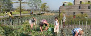 Modélisation du parcours découverte du coeur agro-urbain de Montévrain. De futurs habitants jardinent dans le potager de l'écoquartier