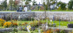 Photographie de jardin partagé dans l'écoquartier, Le Sycomore, à Bussy Saint-Georges