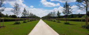 Allée Imperatrice à Ferrières-en-Brie 200 arbres et 1 séquoia en paysage